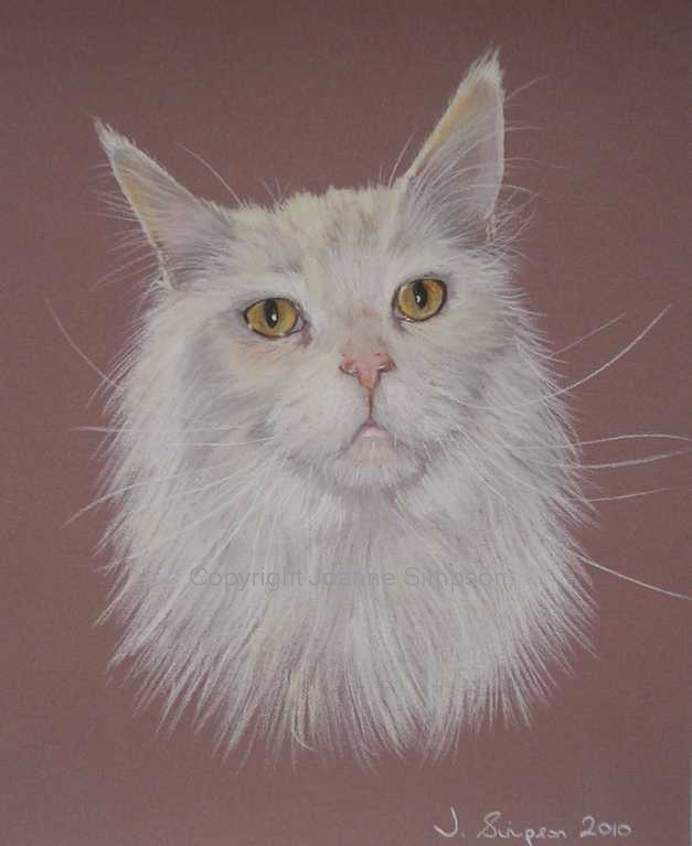 Maine Coon pet portrait by Joanne Simpson