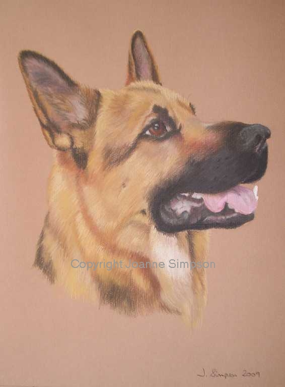 German Shepherd pet portrait by Joanne Simpson.