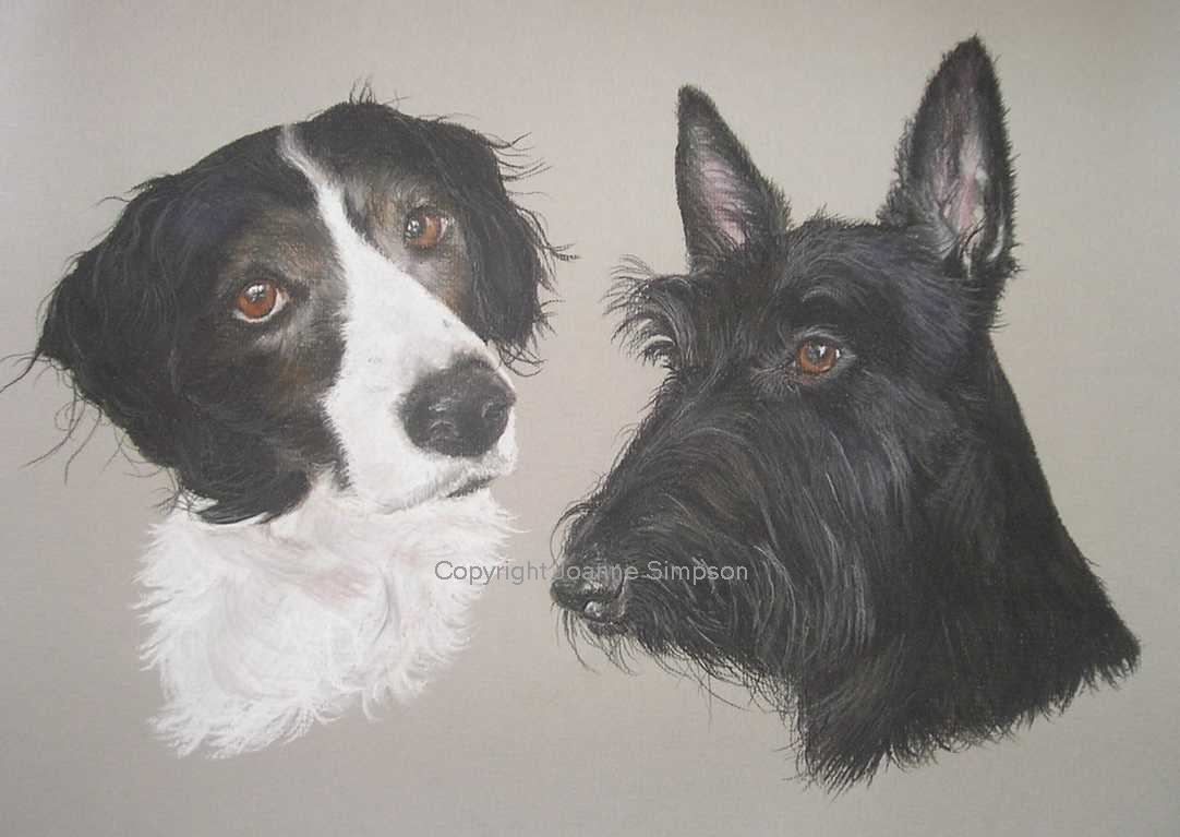 Scottish Terrier portrait by Joanne Simpson