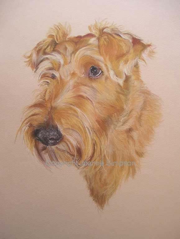 Irish Terrier portrait by Joanne Simpson