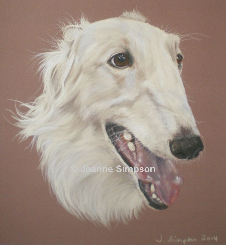 Borzoi pet portrait