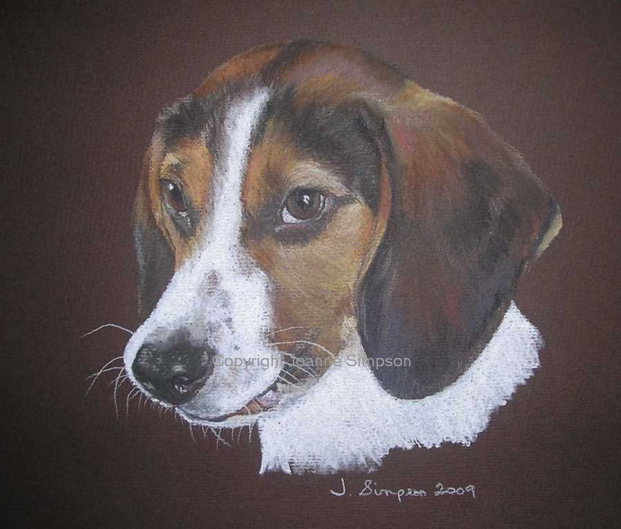 Beagle pet portrait by Joanne Simpson.