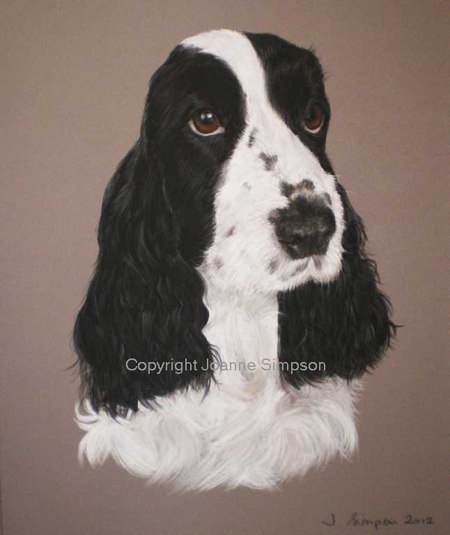 English Cocker Spaniel pet portrait by Joanne Simpson.