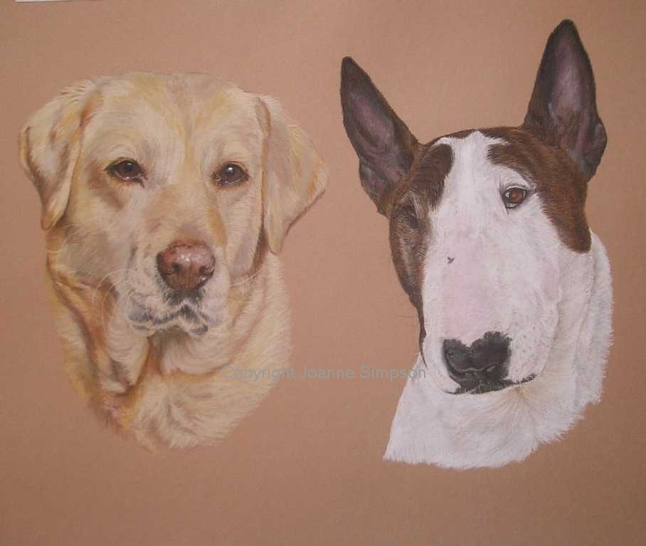 Golden Labrador and Bull Terrier portrait by Joanne Simpson.