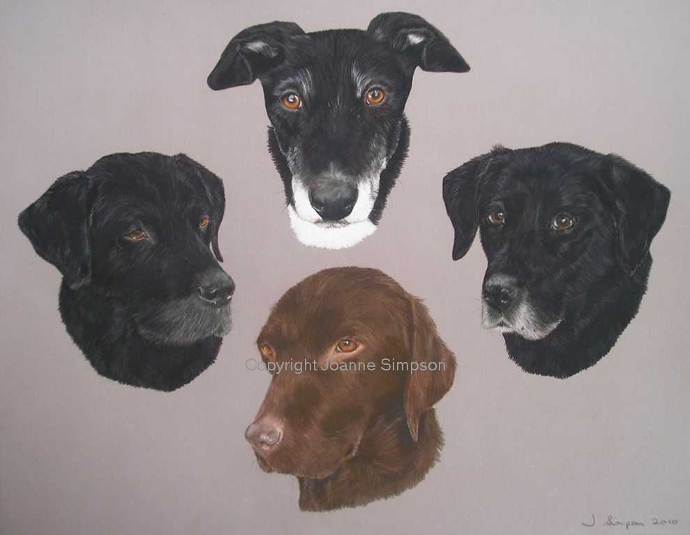 Labradors and Lurcher pet portrait by Joanne Simpson