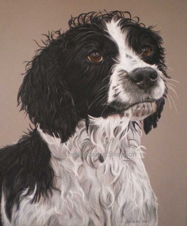 English Springer Spaniel pet portrait by Joanne Simpson.