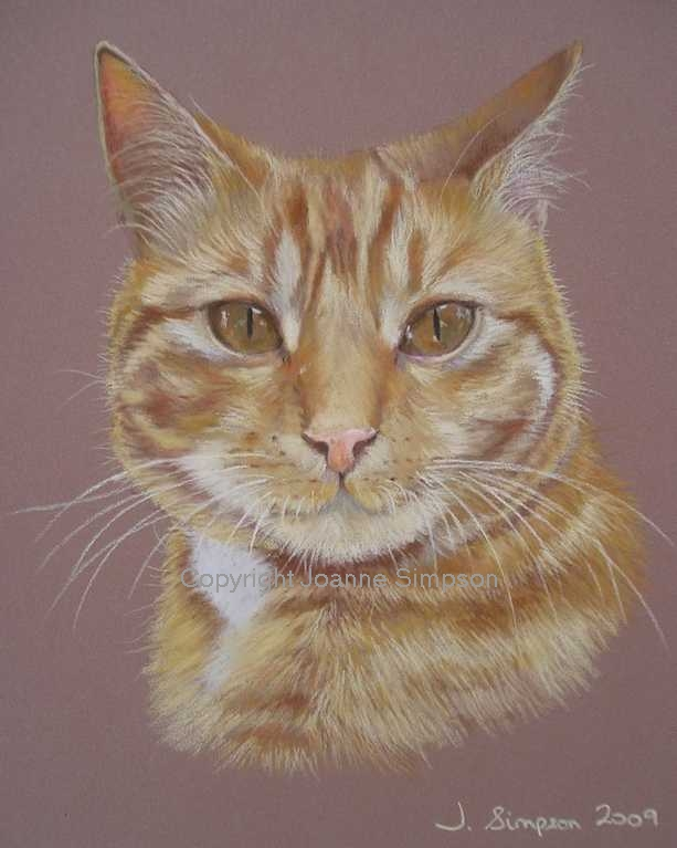 Ginger tabby cat pet portrait by Joanne Simpson