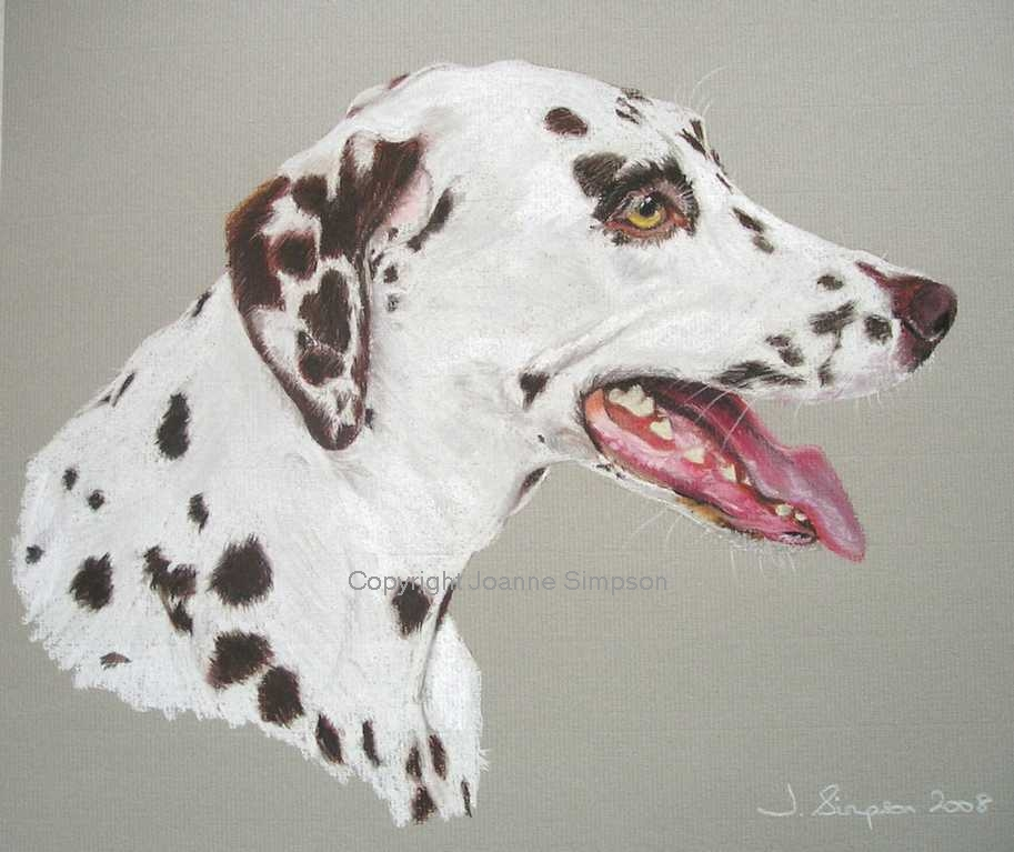 Dalmation portrait by Joanne Simpson