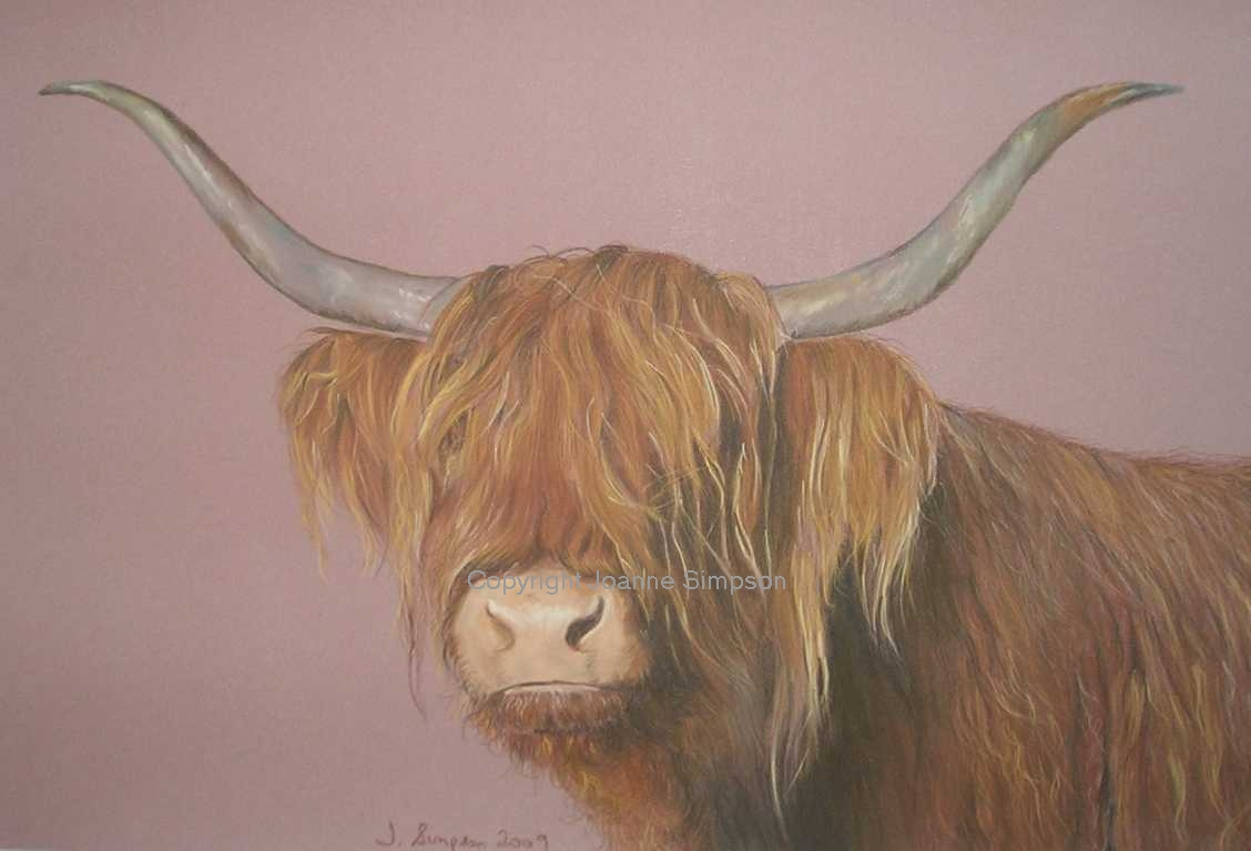 Highland Cow pet portrait by Joanne Simpson.