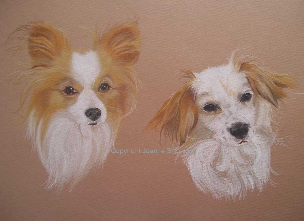 Papillon pet portrait by Joanne Simpson