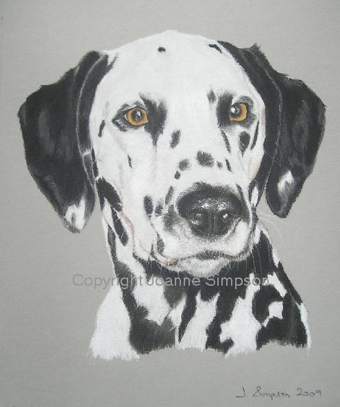 Dalmation pet portrait by Joanne Simpson