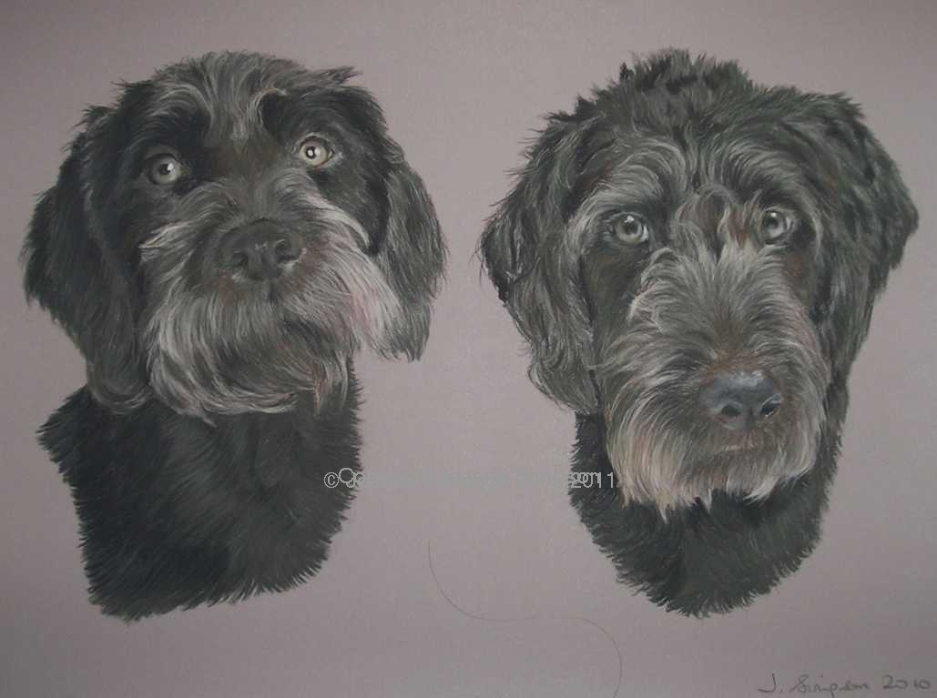 Labradoodle pet portrait by Joanne Simpson