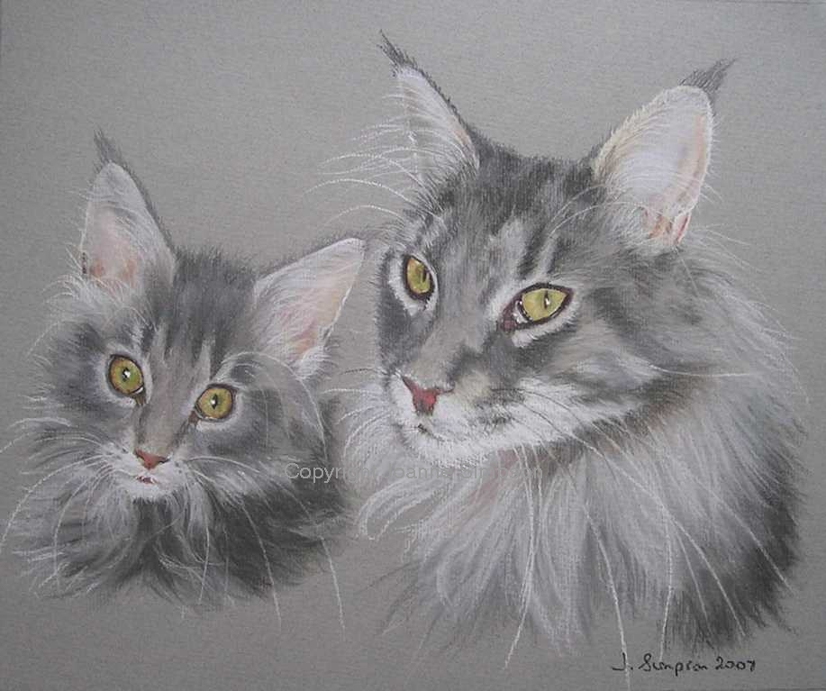Maine Coon pet portrait by Joanne Simpson.