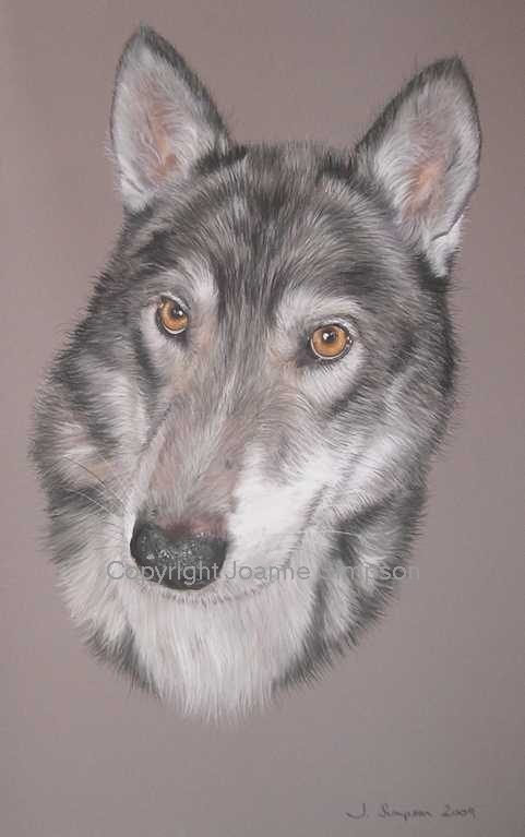 Siberian Husky pet portrait by Joanne Simpson