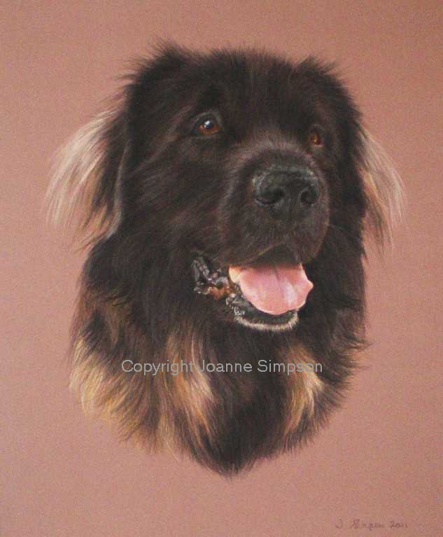 Leonberger pet portrait by Joanne Simpson.