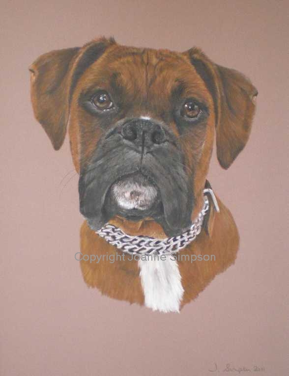 Boxer dog pet portrait by Joanne Simpson