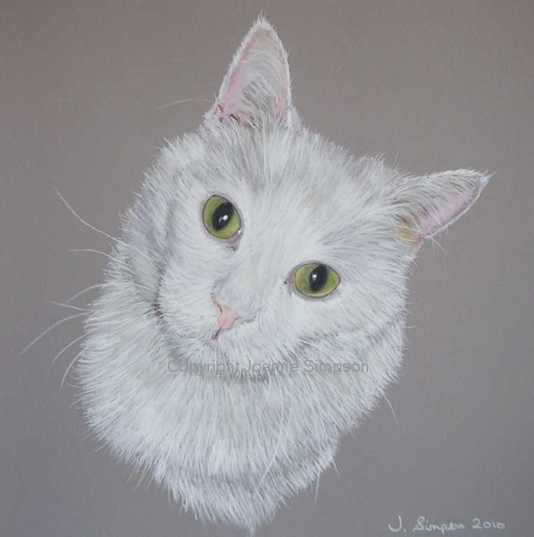 White cat pet portrait by Joanne Simpson