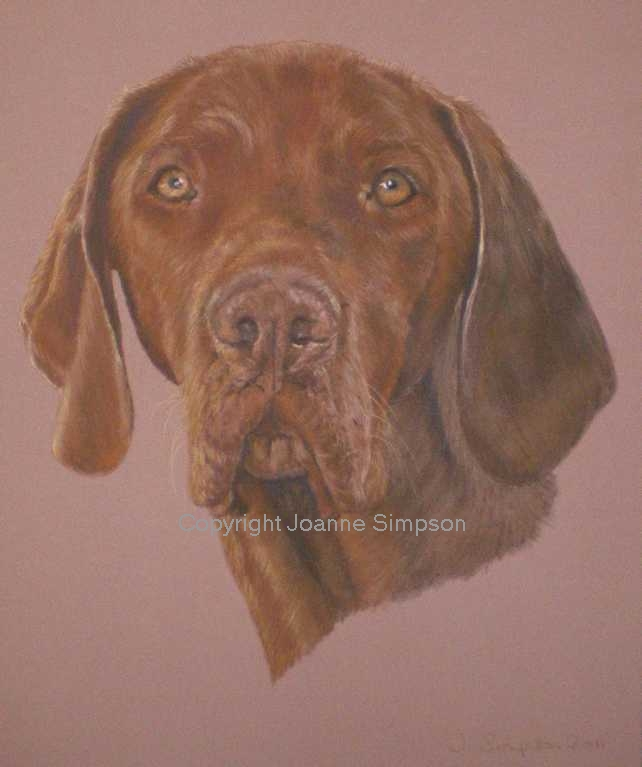Hungarian Vizsla pet portrait by Joanne Simpson