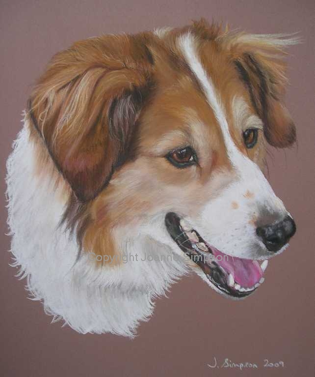 Border Collie portrait by Joanne Simpson.