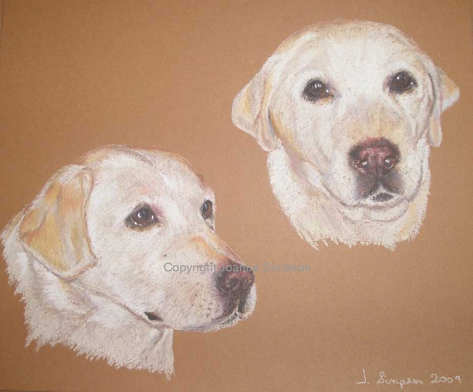 Golden Labrador portrait by Joanne Simpson