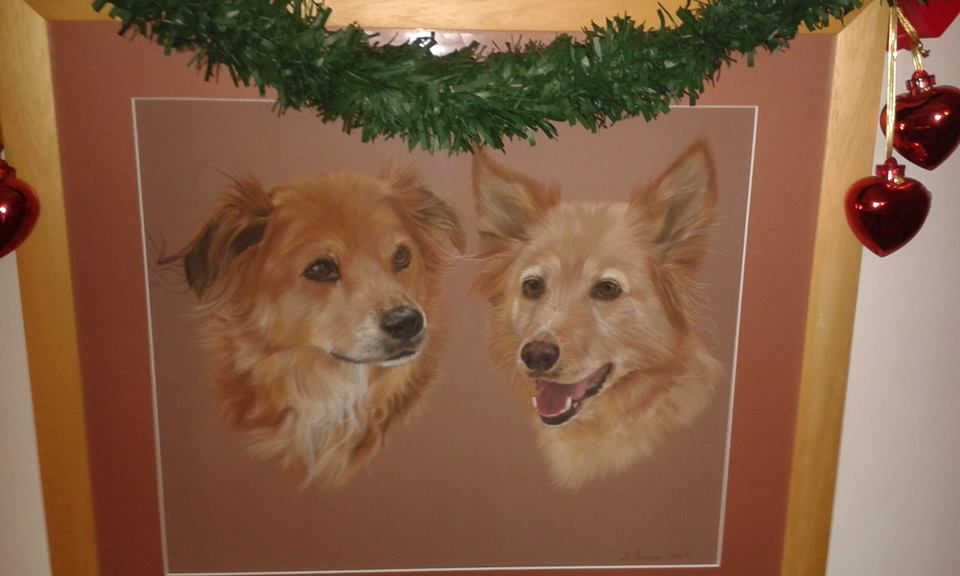 Pet portrait by Joanne Simpson