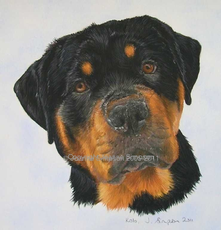 Rottweiler pet portrait by Joanne Simpson