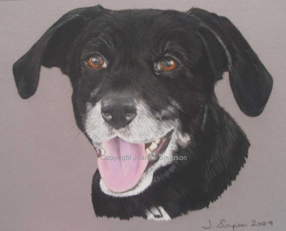 Labrador cross pet portrait by Joanne Simpson