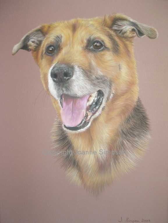 Cross breed portrait by Joanne Simpson