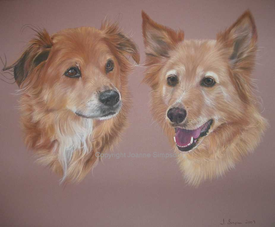 Double crossbreed pet portrait by Joanne Simpson.