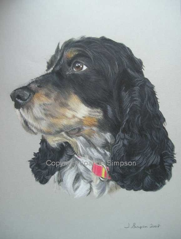 Cocker Spaniel portrait by Joanne Simpson