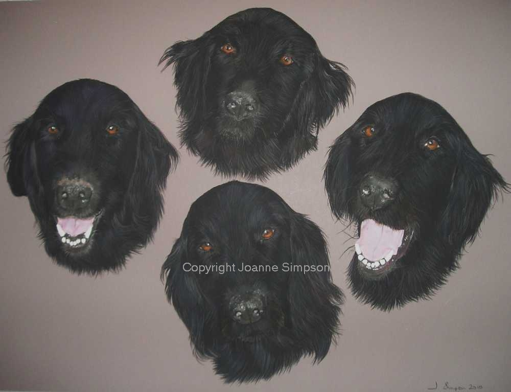 Flat coat retriever pet portrait by Joanne Simpson