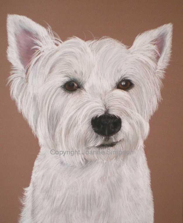 West Highland White Terrier (Westie) pet portrait by Joanne Simpson.