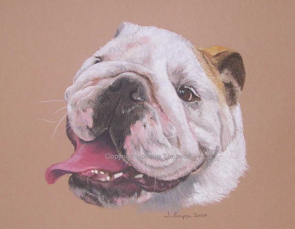British Bulldog pet portrait by Joanne Simpson.