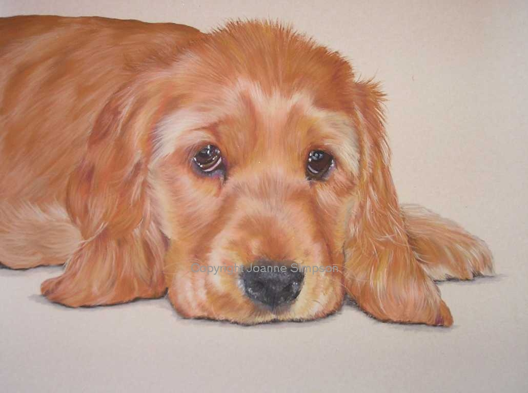 Golden Cocker Spaniel pet portrait by Joanne Simpson.