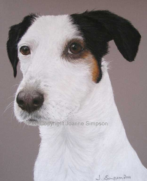 Jack Russell cross pet portrait by Joanne Simpson