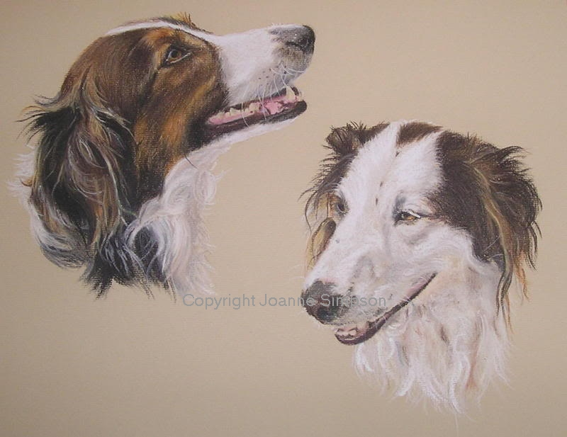 Border Collie cross pet portrait by Joanne Simpson