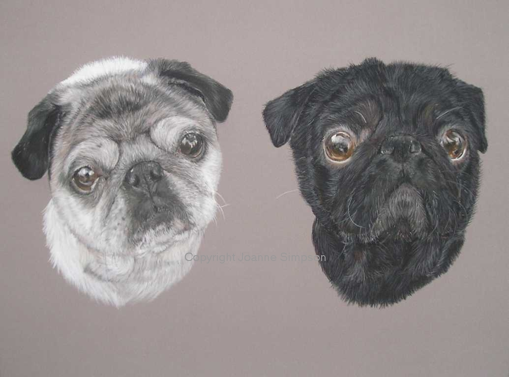 Double Pug pet portrait by Joanne Simpson