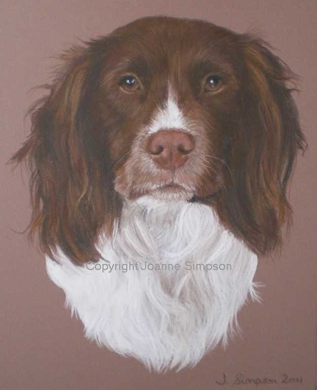 English Springer Spaniel pet portrait by Joanne Simpson
