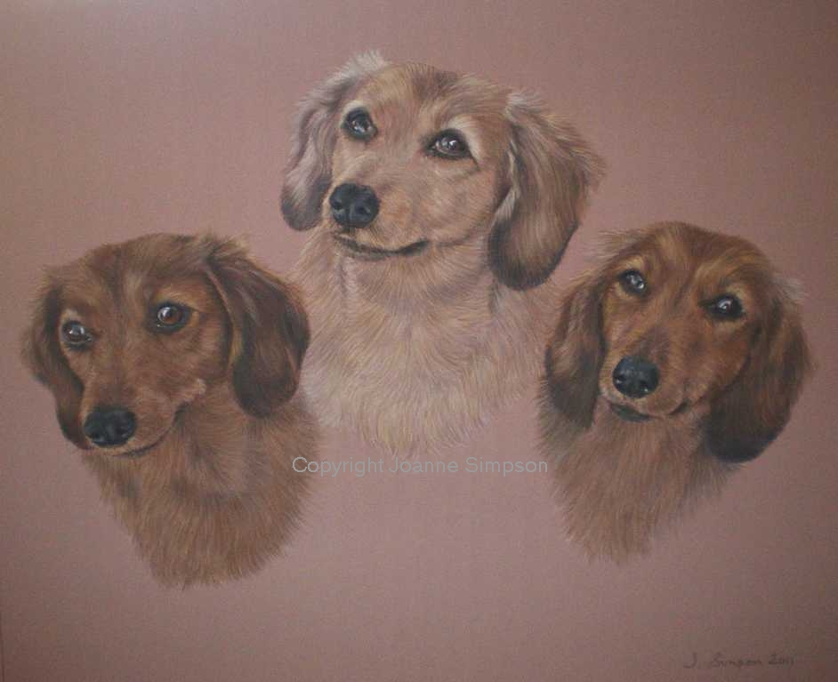 Miniature Dachshund pet portrait by Joanne Simpson