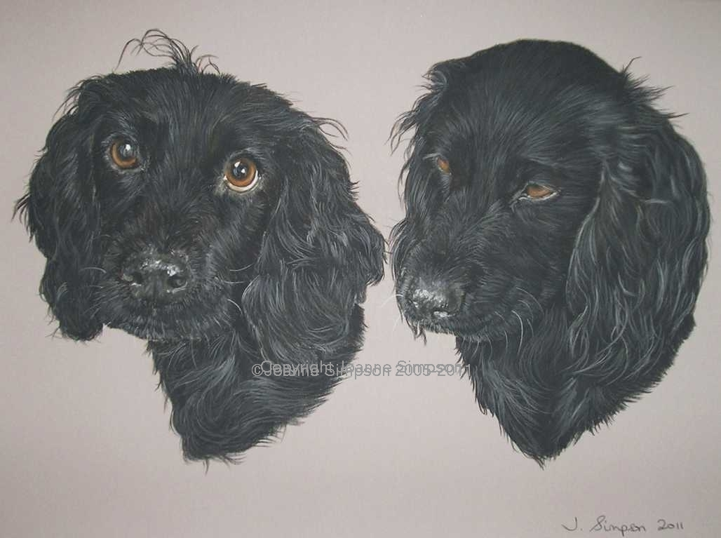 Black English Cocker Spaniel pet portrait by Joanne Simpson