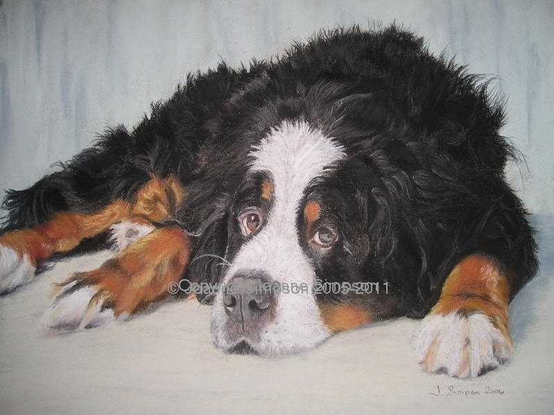 Bernese Mountain Dog pet portrait by Joanne Simpson