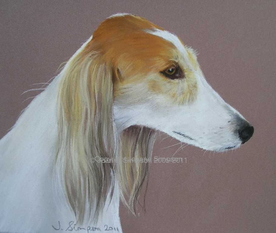 Saluki pet portrait by Joanne Simpson