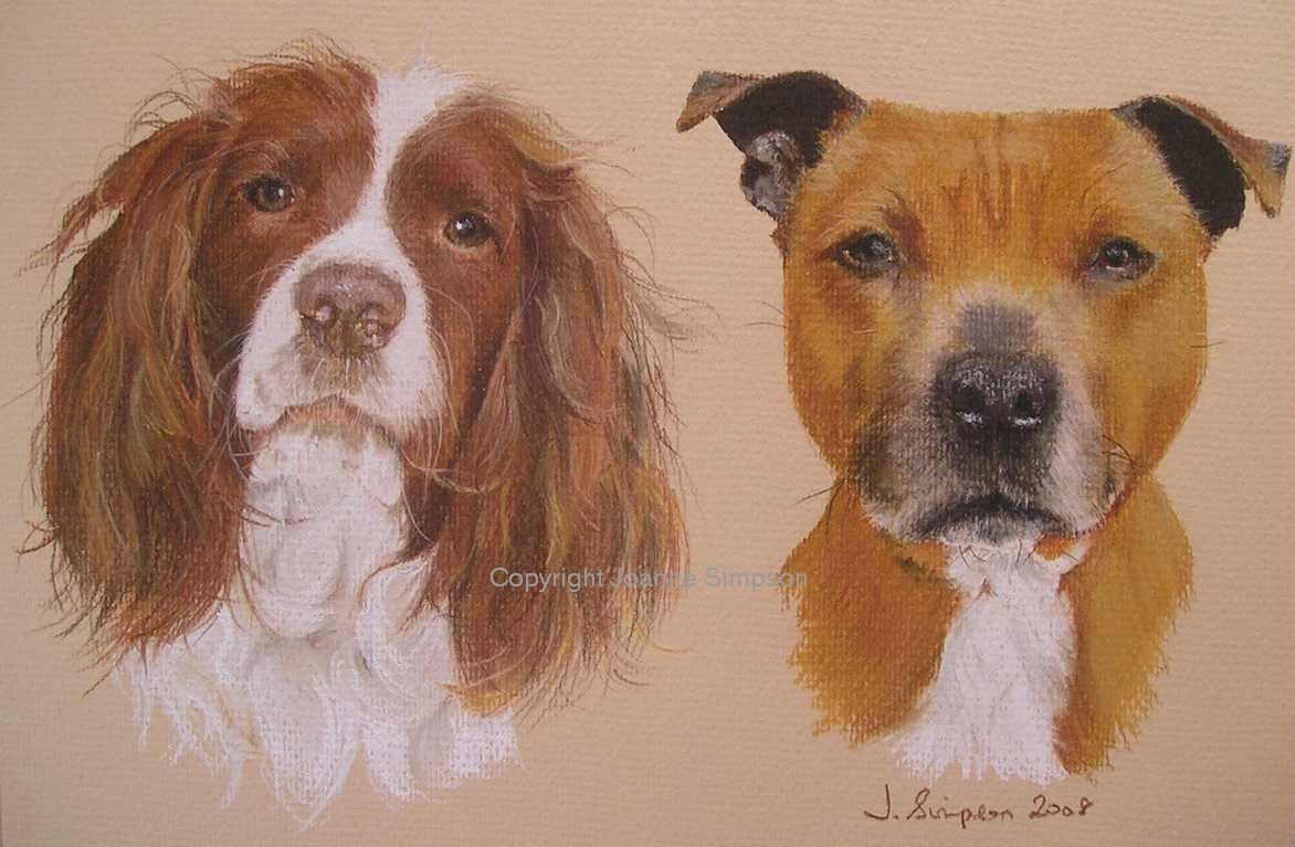 Springer Spaniel and Staffordshire Bull Terrier portrait by Joanne Simpson.
