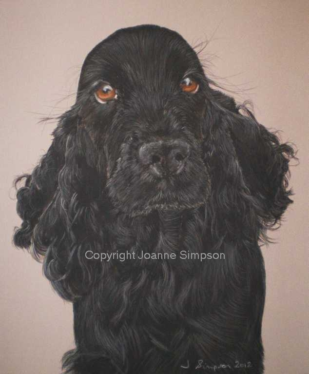 Black English Cocker Spaniel portrait by Joanne Simpson.