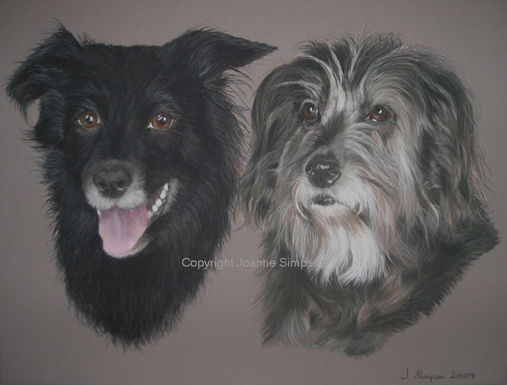 Border Collie and Bearded Collie pet portrait by Joanne Simpson