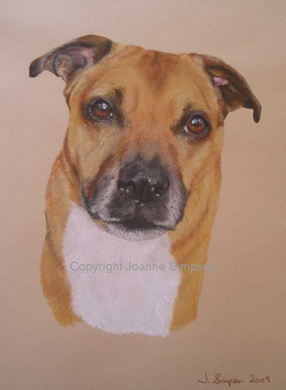 Pittbull cross pet portrait by Joanne Simpson
