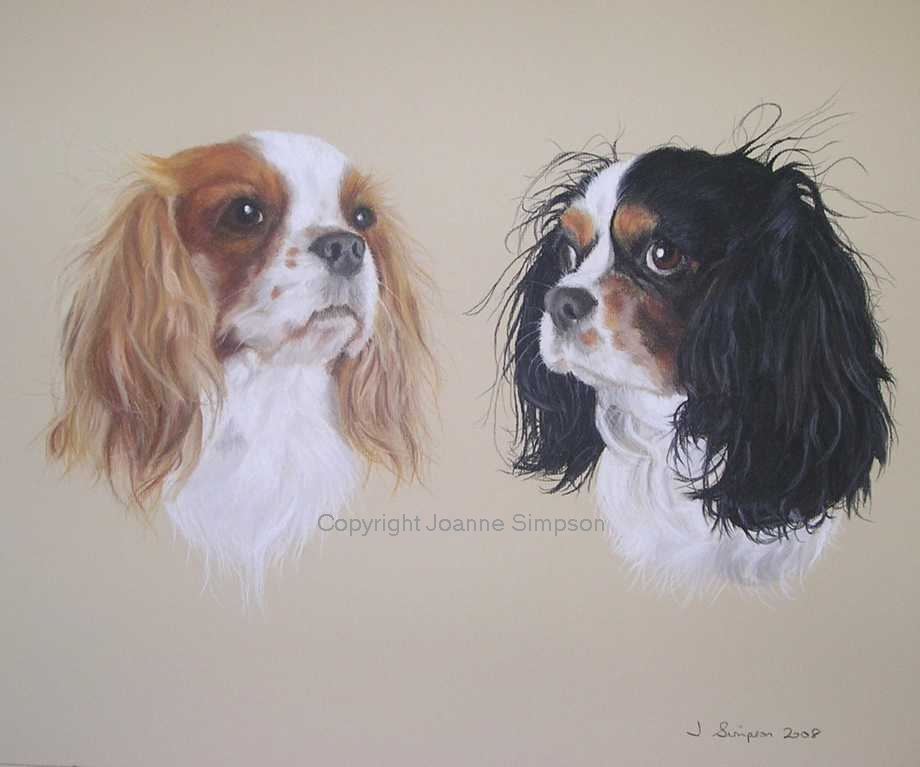 Cavalier King Charles portrait by Joanne Simpson