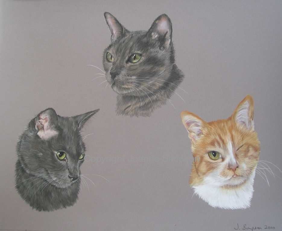 Triple cat portrait by Joanne Simpson