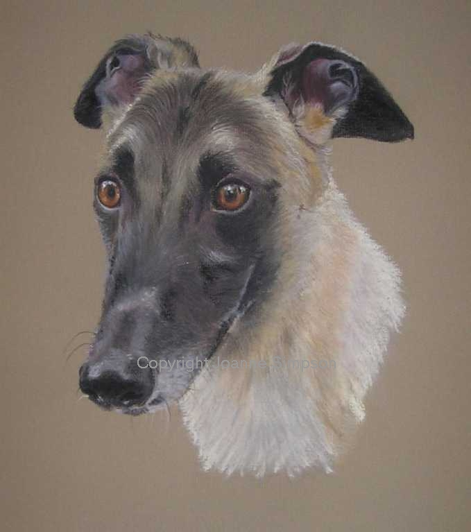 Greyhound pet portrait by Joanne Simpson.