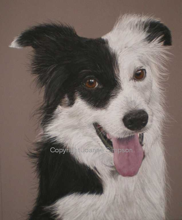 Border Collie pet portrait by Joanne Simpson.